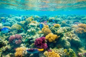 Beginners Guide to Corals