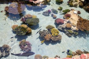 19 Best & Super Easy Corals For Beginners